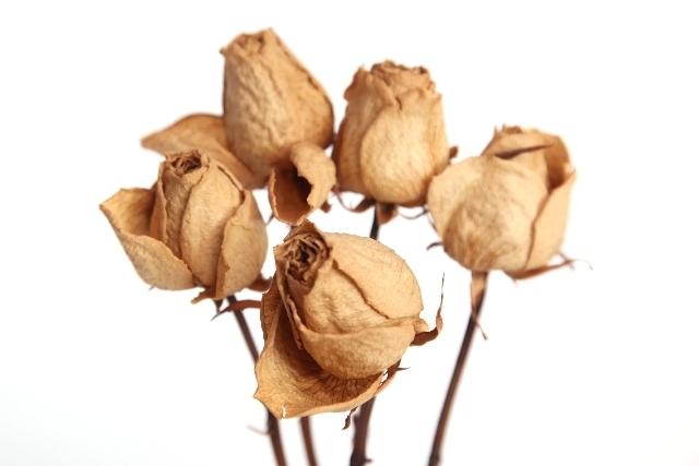 薔薇のドライフラワー.jpg